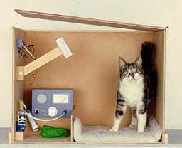 schrodinger-cat